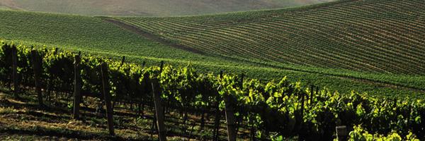 Getting a Taste of Shasta View Vineyards