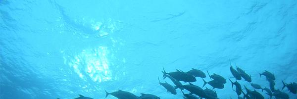 Scuba Diving in Cabo San Lucas & La Paz